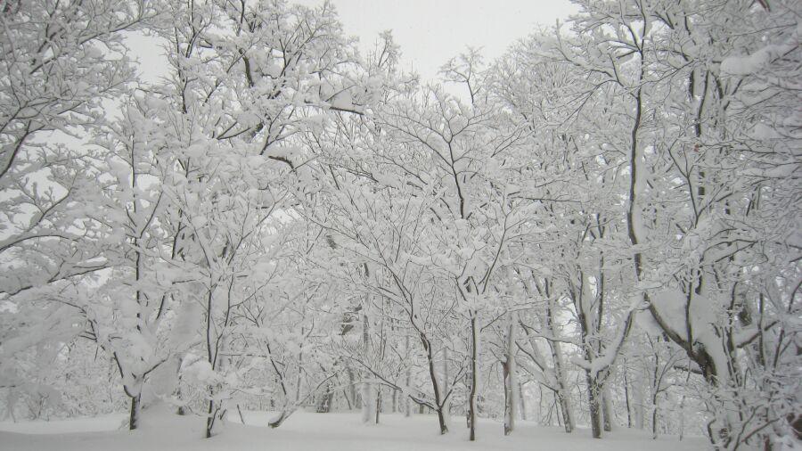 雪が降ると物販に少なからず影響します